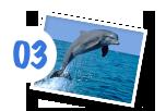 Delphin Gruppe